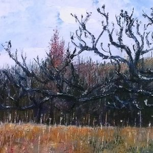 Trees at Abbeystead, oil on board