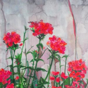 Geraniums, Soubes, watercolour