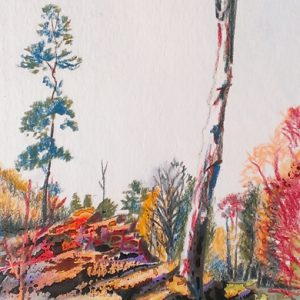Pine at Williamson Park, pastel & watercolour