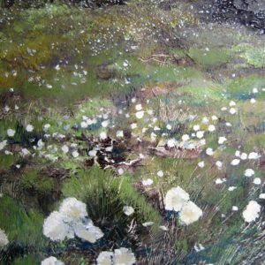 SOLD Cottongrass at Widdop, oil on board